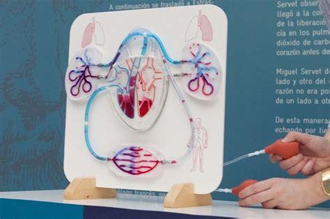 maqueta sistema circulatorio humano cosas que comprar science school nature