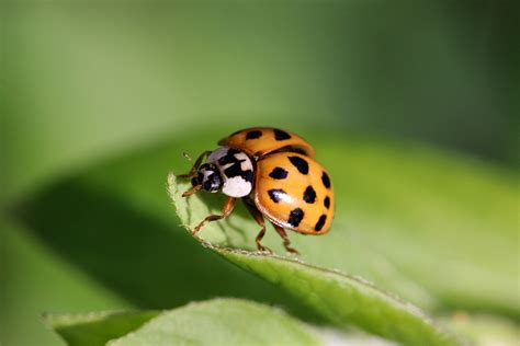 what color is a ladybug why are ladybugs so colorful treehugger