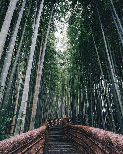 japanese photographer documents  beauty  everyday