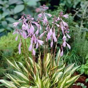 Rotes Gras Winterhart : pflanzen k lle rot stiel fun kie 39 cher ry berry 39 11 cm ~ Michelbontemps.com Haus und Dekorationen