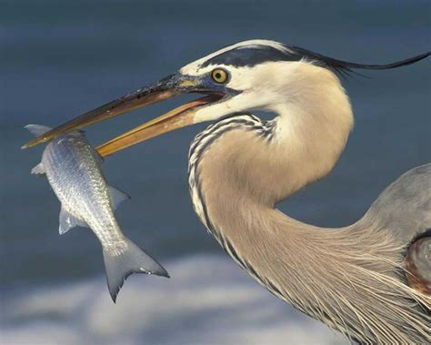 Audubon Field Guide