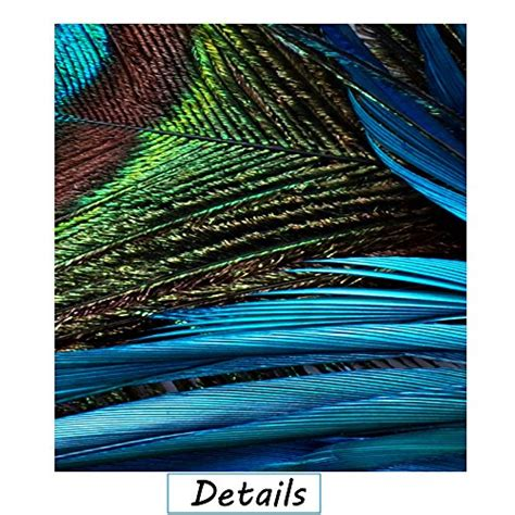 framed peacock feather beautiful large wall art prints