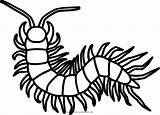 Centipede Coloring Millipede Outline Transparent Pngkey sketch template