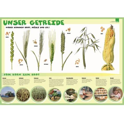 Der Zaun Arten Materialien Aufbau by Bildergebnis F 252 R Vom Korn Zum Brot Kindergarten