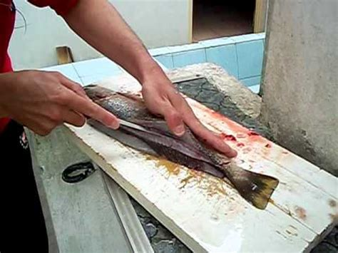 TÉcnica Para Filetear Pescados Primera Parte Youtube