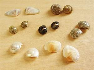 Seashell Earrings - How Did You Make This? Luxe DIY