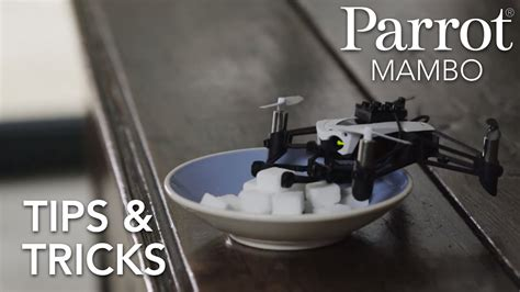 parrot minidrones mambo tutorial  tips tricks youtube