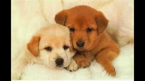 imagenes de animales tiernos cachorros super tiernos youtube