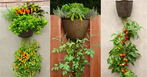 Here's How To Grow Vegetables And Fruits In A Hanging Basket