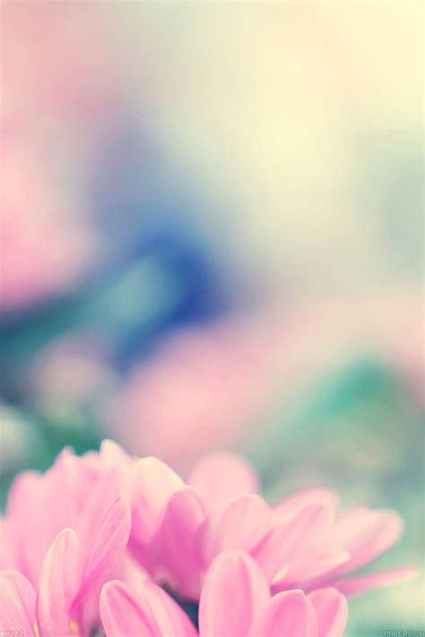 mc wallpaper boo  flower pink blurred papersco