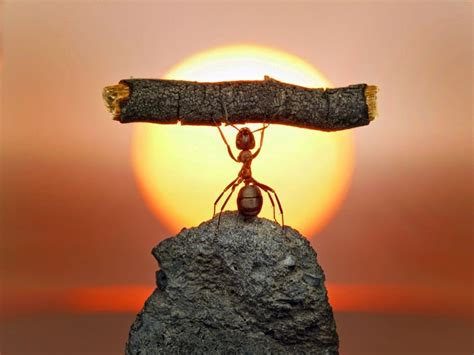 fantasy world  ants real ants earthly mission