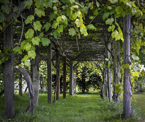 grape arbor pergola plans  woodworking