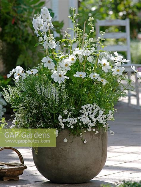 gap gardens summer container of cosmos sonata white delphinium galahad salvia nemorosa