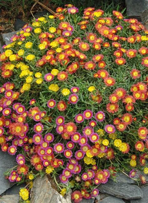 Blumen Für Balkon Winterhart by Winterharte Balkonpflanzen Garden Garden Garden