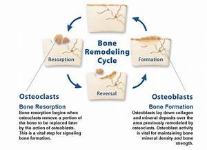 Sportsciencengineering  Bone  U0026 Muscle
