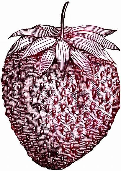 Digital Stamp Stamps Clipart Strawberry Printable Sweet