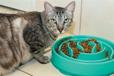 cat puzzle feeder the cat food vs cat food debate catster