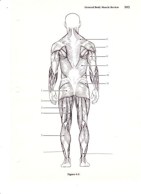 Blank Muscle Diagram To Label  Anatomy Organ