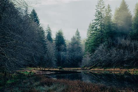 green pine trees  river  daytime photo