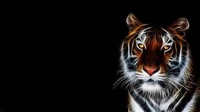 Tiger 3d Desktop Wallpapers Animated Backgrounds Animal