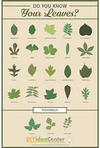 Leaf Identification Guide DIYIdeaCenter com