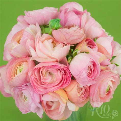rio roses light pink ranunculus wedding flowers