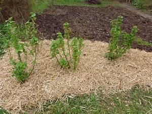Mulchen Mit Grasschnitt : str ucher bg naturgarten ~ Lizthompson.info Haus und Dekorationen