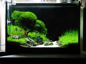 Quot evergreen l alberello in acquario secondo sago