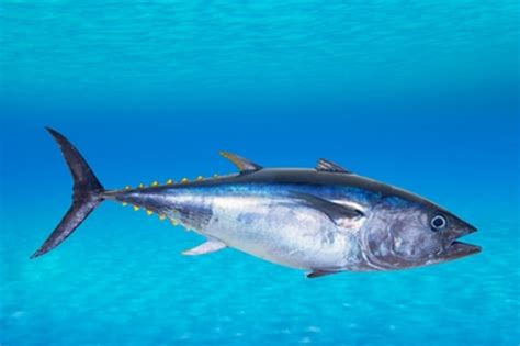 le canapé le plus cher du monde image gallery le poisson
