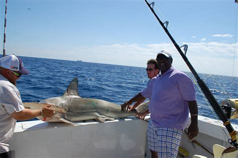 fishing hallandale shark charters miami sharks lauderdale fort south fish tarpon