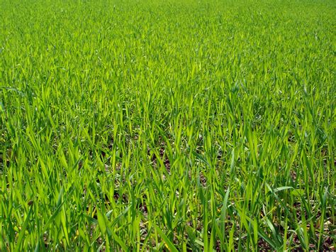 of grass health benefits of doob grass