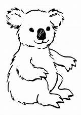 Koala Coloring Pages Printable Bear Animal Sheets Cute Template Templates Animalplace sketch template