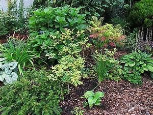 Welche Pflanzen Passen Gut Zu Hortensien : welche pflanzen passen gut zu bambus ostseesuche com ~ Heinz-duthel.com Haus und Dekorationen