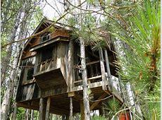 Lynn Knowlton's Eco Friendly Tree Fort – Enpundit