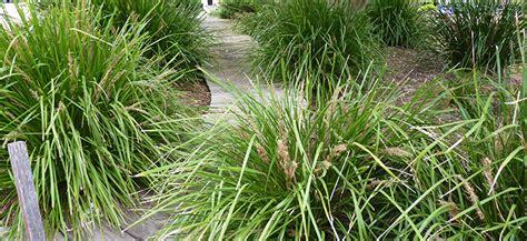Native Grasses  Flower Power