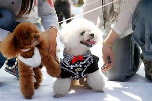 these 15 dog couples totally just got married