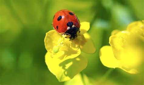 Garden Bugs by Guide To Beneficial Bugs For The Garden