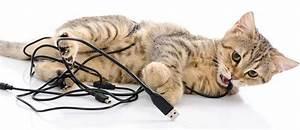 Wie Fange Ich Eine Katze : katze von kabeln fernhalten tipps tricks tierisch wohnen ~ Markanthonyermac.com Haus und Dekorationen
