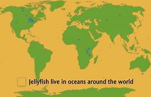 Jellyfish Facts! | National Geographic Kids