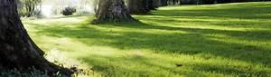 Gazon Pour L Ombre : le gazon de type ombre caract ristiques carneau ~ Premium-room.com Idées de Décoration