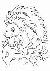 Animals Nocturnal Coloring Pages Porcupine Printable Animal Preschool Toddlers Classic Momjunction Crafts Mask Comments sketch template