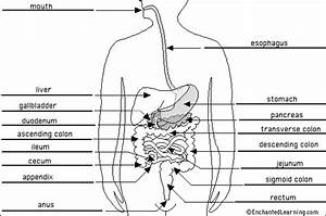 Stream Tattoos  Digestive System Diagram To Label