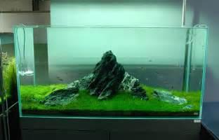 aquarium designer nature aquariums and aquascaping inspiration