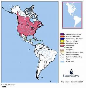 Tennessee Watchable Wildlife European Starling - Habitat: 1