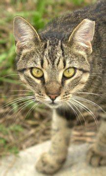 feral cats saving graces  felines