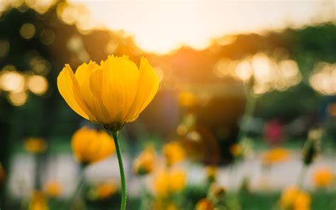 bedeutung gelbe gelbe blumen und ihre bedeutung floraqueen deutschland