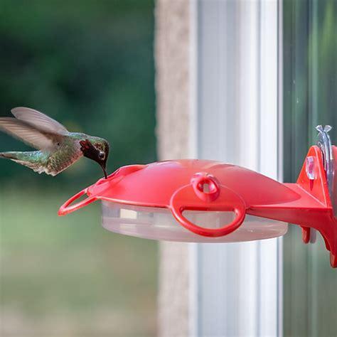pet hummingbird for duncraft pet window mount hummingbird feeder 6952