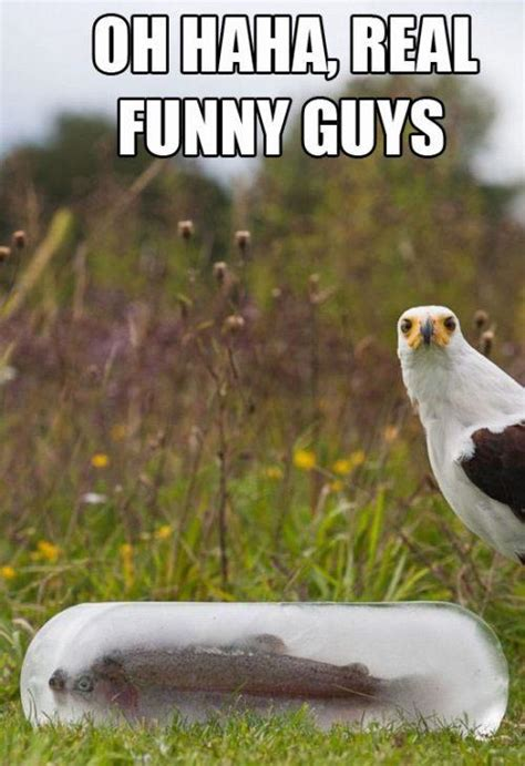 Extremely Funny Animal Quotes Quotesgram