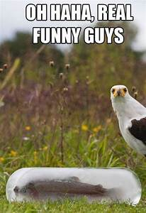 Extremely Funny Animal Quotes. QuotesGram