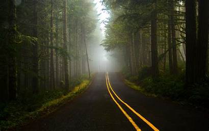 Forest Dark Road Wallpapers Nature Natural Desktop